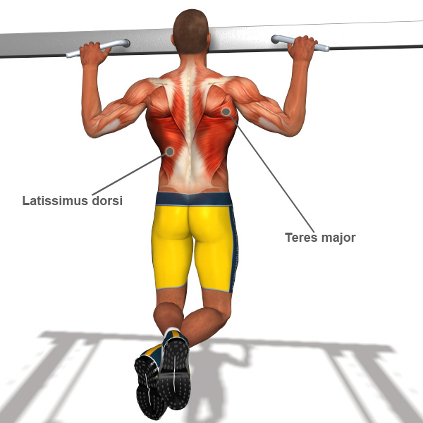 Back workout on pull up bar